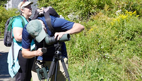 Inspire Your Inner Bird Watcher. Join renowned birder Dr. Jeff Wells for exclusive bird-watching tours of Maine's coast — or go birding by kayak — for an amazing birding tour like no other.