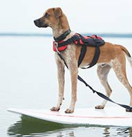 $25 SUP WITH YOUR PUP DISCOVERY COURSE