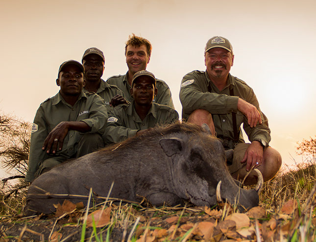 Hunting on the plains of Central Africa with his good friend J.P. Kleinhans, Bill got a Warthog.