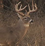 Bill Hunts Whitetail in Kansas on L.L.Bean Guide to the Outdoors.